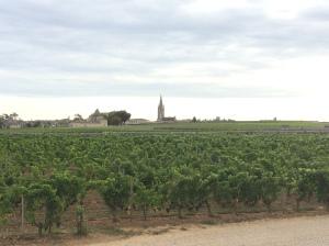 View of a St. Emilion vineyard